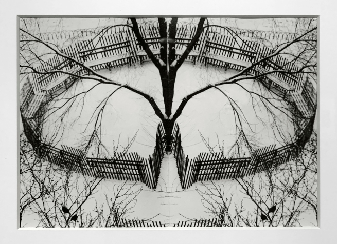 André Kertész (Hungarian, 1894-1985) 'Winter Garden, New York' 1970 (installation view)