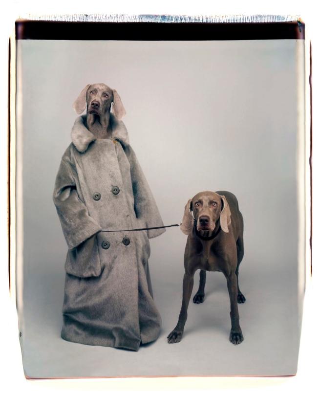 William Wegman (American, b. 1943) 'Dog Walker' 1990