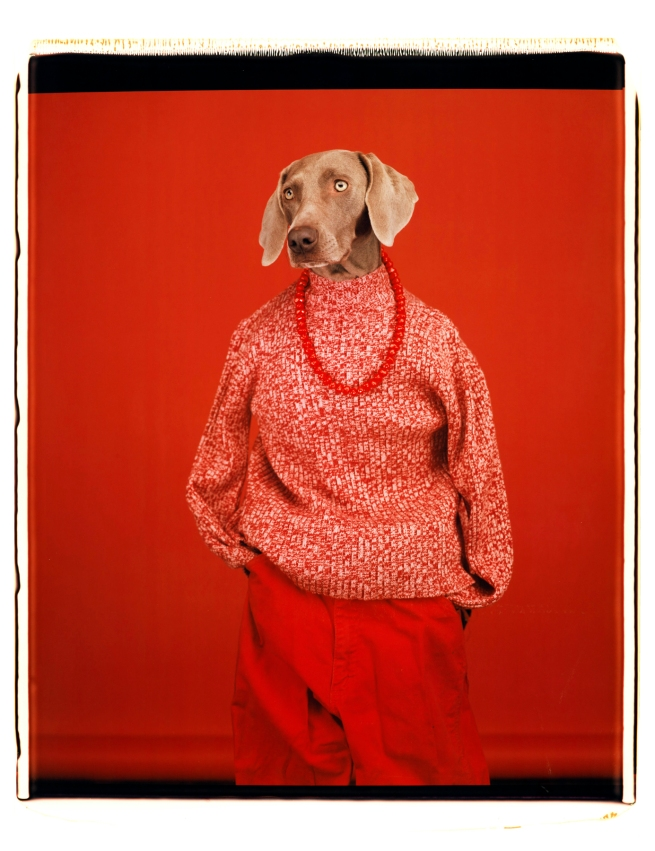 William Wegman (American, b. 1943) 'Casual' 2002