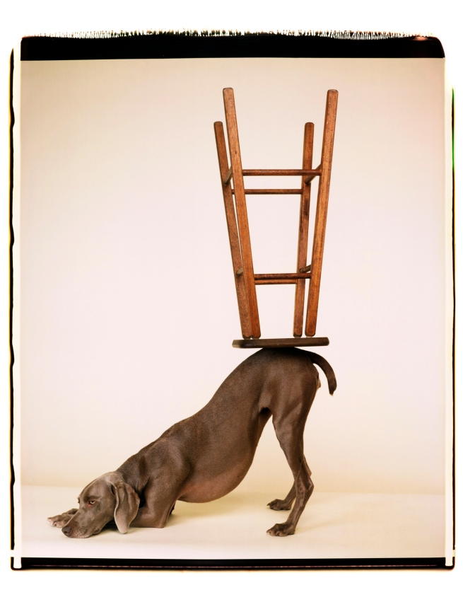 William Wegman (American, b. 1943) 'Upside Downward' 2006