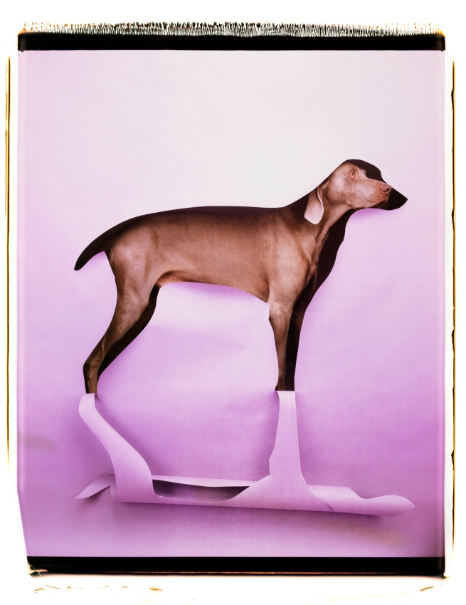 William Wegman (American, b. 1943) 'Cut to Reveal' 1997