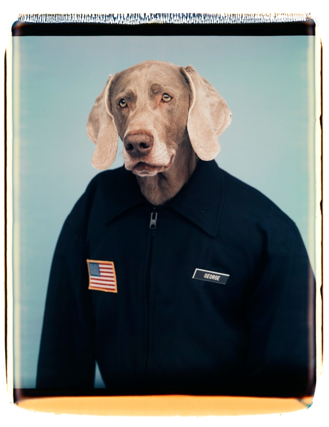 William Wegman (American, b. 1943) 'George' 1997