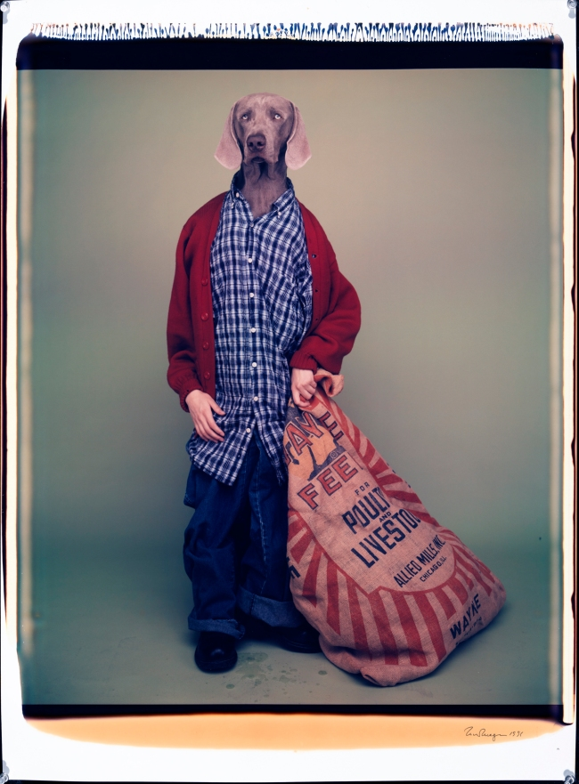 William Wegman (American, b. 1943) 'Farm Boy' 1996