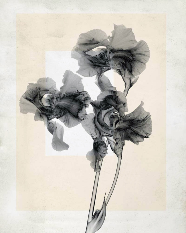 Thomas Ruff. 'flower.s_10' 2019