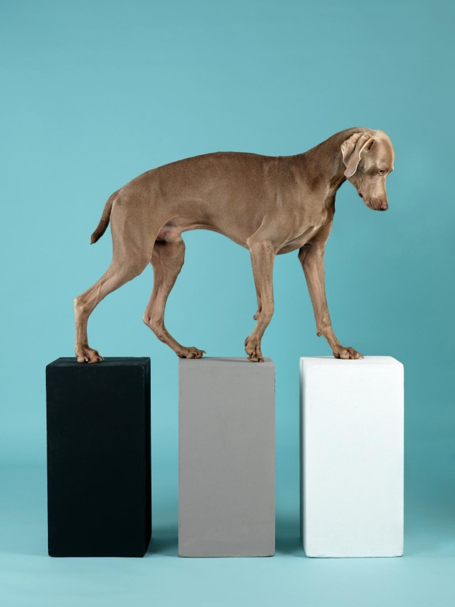 William Wegman (American, b. 1943) 'Contact' 2014
