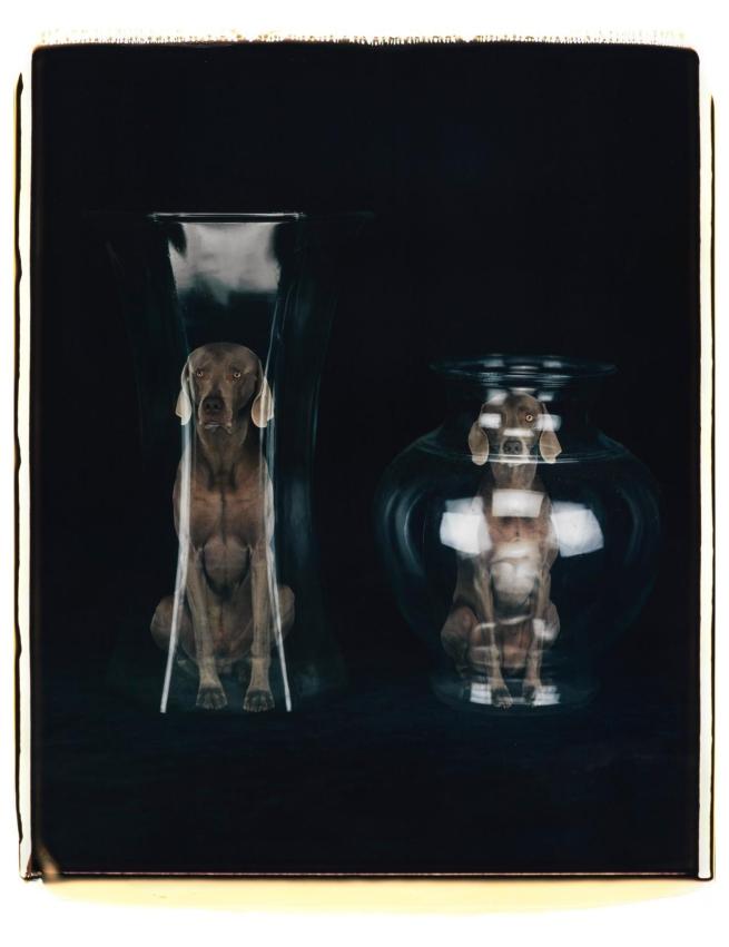 William Wegman (American, b. 1943) 'From the spirit world' 2006