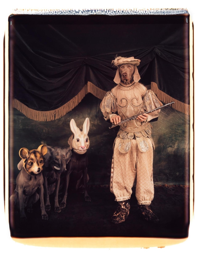 William Wegman (American, b. 1943) 'Tamino with magic flute' 1996