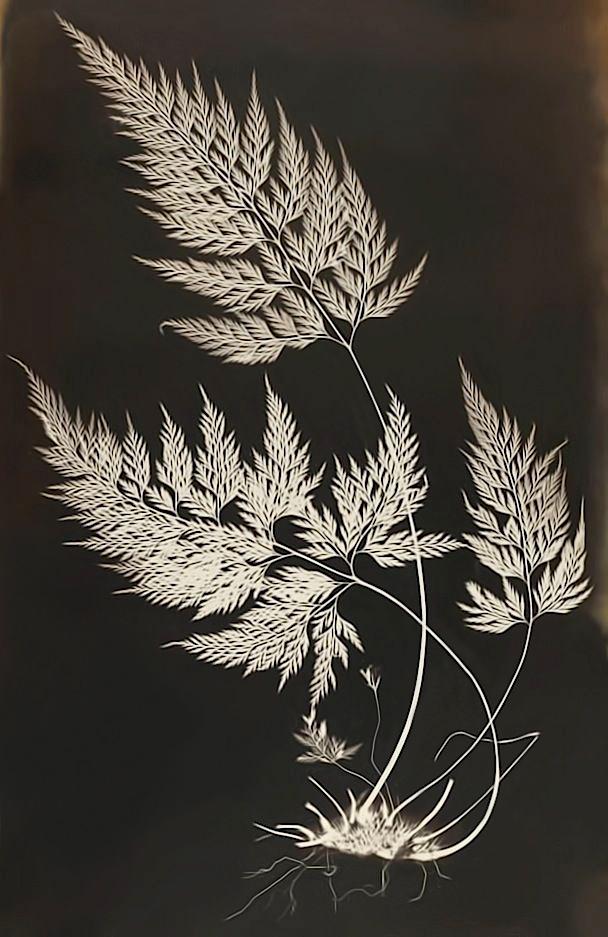 Cecilia Glaisher (British, 1828-1892) 'Bory's Spleenwort (Asplenium onopteris)' c. 1853-56