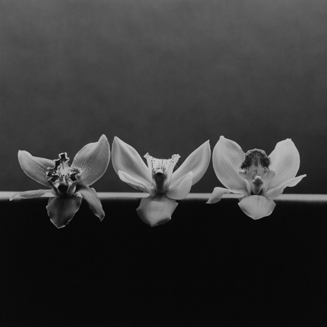 Robert Mapplethorpe (American, 1946-1989) 'Orchid' 1985