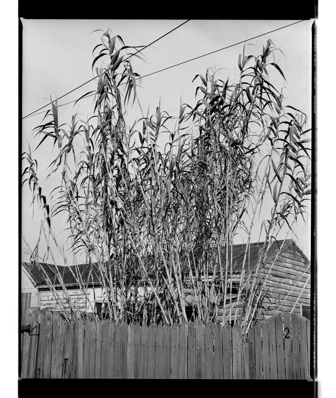 Marcus Bunyan. 'Bamboo' 1994-1996