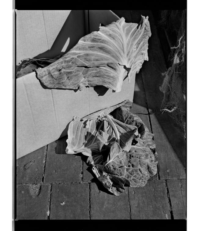 Marcus Bunyan (Australian, b. 1958) 'Cabbage' 1994-96