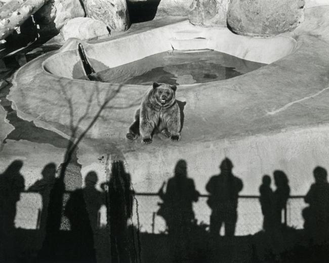 Gary Krueger (American, b. 1945) 'Los Angeles Zoo, 1971' 1971