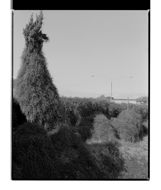 Marcus Bunyan (Australian, b. 1958) 'Monster' 1994-96