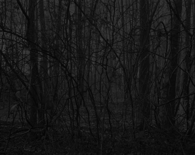 Dawoud Bey (American, b. 1953) 'Untitled #17 (Forest)' 2017