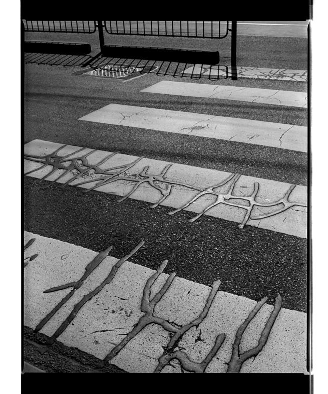 Marcus Bunyan (Australian, b. 1958) 'Untitled (creatures)' 1996