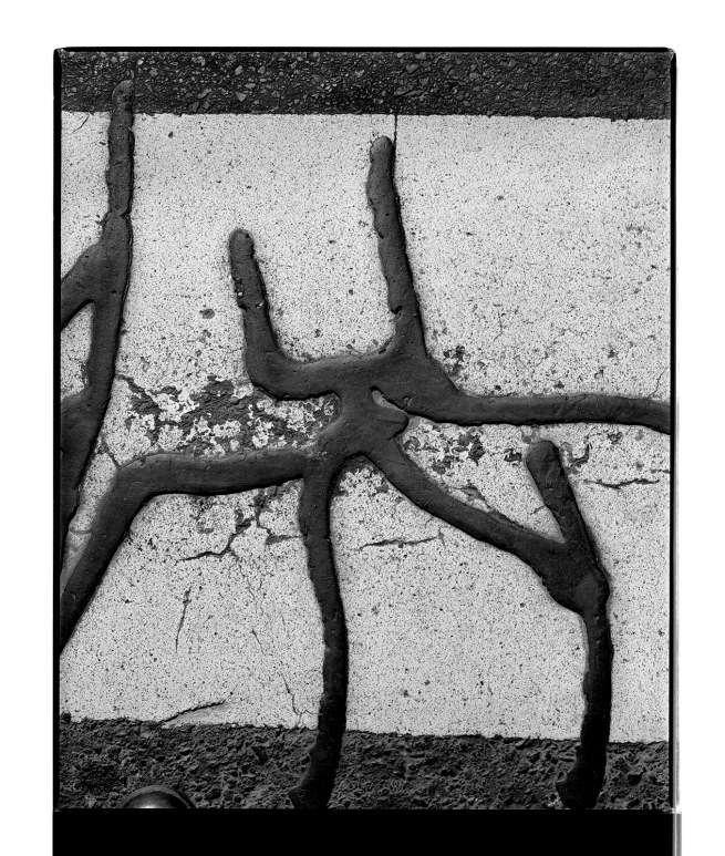 Marcus Bunyan (Australian, b. 1958) 'Untitled (creature)' 1996