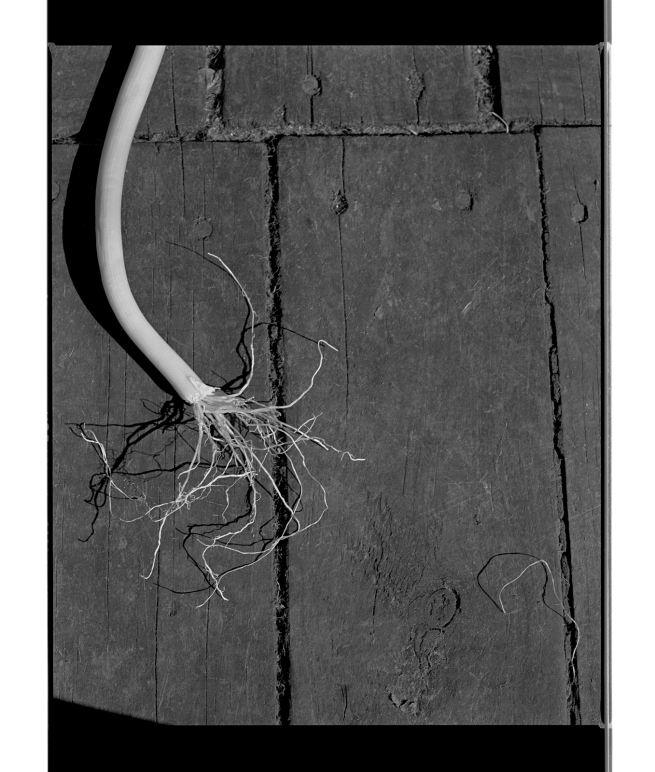 Marcus Bunyan (Australian, b. 1958) 'Untitled' 1995