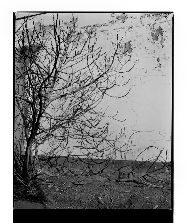 Marcus Bunyan. 'Untitled' 1995