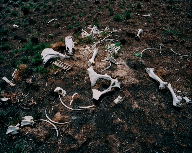 Tom Goldner. 'Untitled' from the series 'Do Brumbies Dream In Red?' 2020