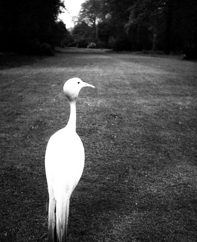 Bill Brandt (British, born Germany 1904-1983) 'Evening in Kew Gardens' 1932