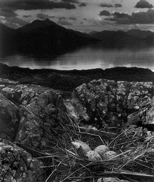 Bill Brandt (British, born Germany 1904-1983) 'Gull's nest, midsummer evening, Skye' 1947