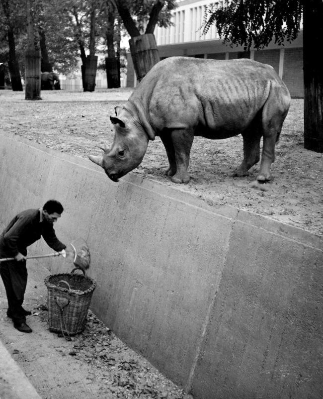 Friedrich Seidenstücker (German, 1882-1966) 'Autumn in the Zoo, African Rhinoceros' c. 1955