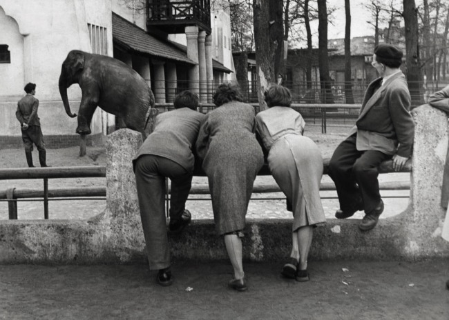 Friedrich Seidenstücker (German, 1882-1966) 'Pachyderms: Zoo visitors at the elephant enclosure in Berlin' 1950