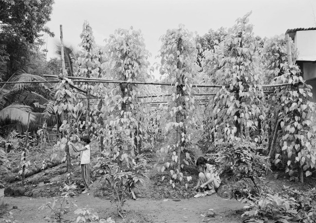 An-My Lê (Vietnamese-American, b. 1960) 'Untitled, Mekong Delta' 1994