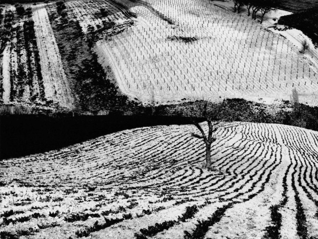 Mario Giacomelli (Italian, 1925-2000) 'Metamorphosis of the Land, No. 283' (Metamorfosi della terra, No. 283) Before 1968, printed 1981