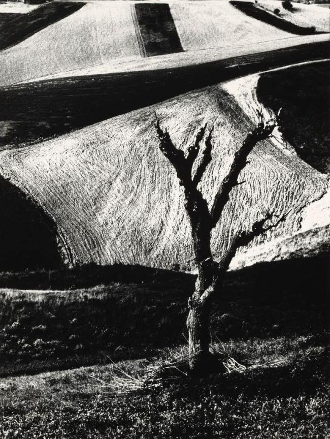 Mario Giacomelli (Italian, 1925-2000) 'Metamorphosis of the Land, No. 5' (Metamorfosi della terra, No. 5) 1971, printed 1981