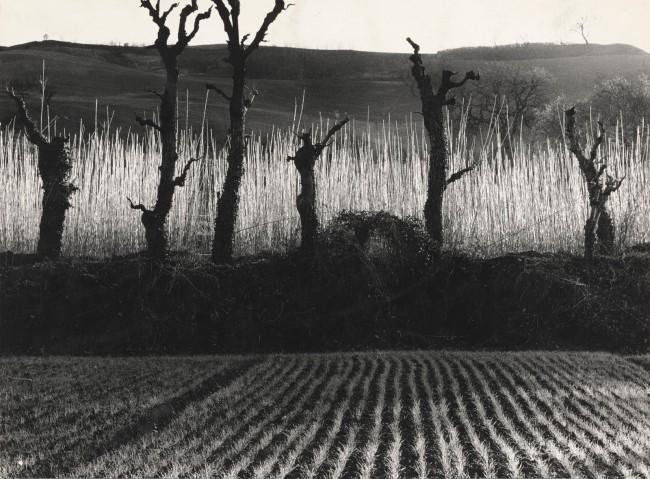 Mario Giacomelli (Italian, 1925-2000) 'Landscape: Flames on the Field' (Paesaggio, fiamme sul campo) 1954; printed 1980